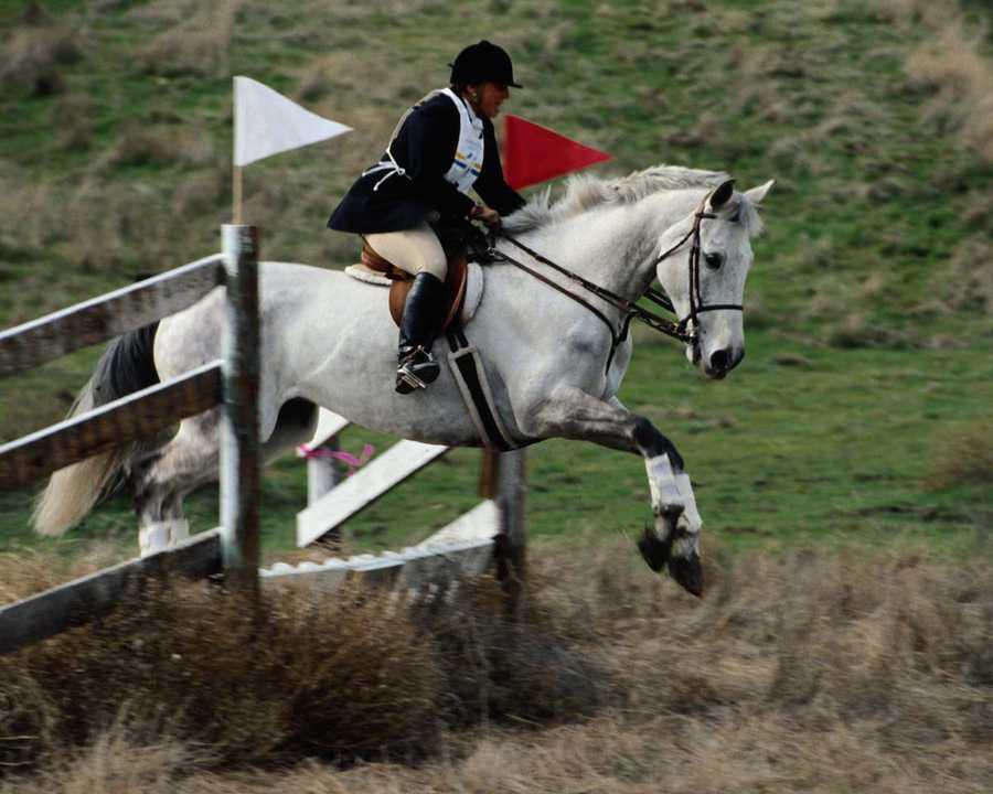 Souscrire une assurance de prêt spécifique à la pratique de sports équestres
